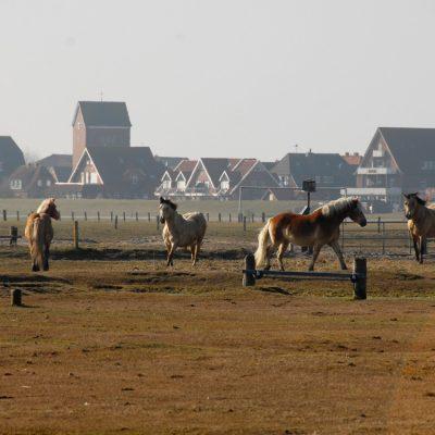 Pferde auf Baltrum